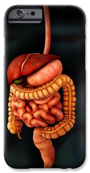 Human Body And Digestive System iPhone Case by Stocktrek Images