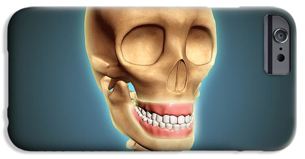 Oral iPhone Cases - Human Skeleton Showing Teeth And Gums iPhone Case by Stocktrek Images