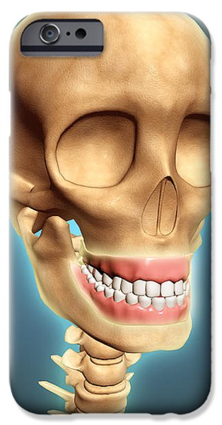 Human Skeleton Showing Teeth And Gums iPhone Case by Stocktrek Images