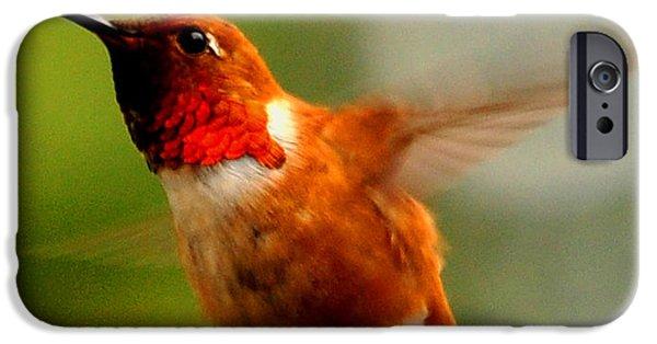 Ruby Garden Jewel iPhone Cases - Humming Bird iPhone Case by Bryan Hanson