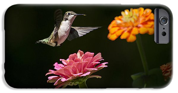 Fauna iPhone Cases - Hummingbird and Summer Blooms iPhone Case by Christina Rollo