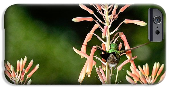 Ruby Garden Jewel iPhone Cases - Hummingbird Butt Up Black and Green iPhone Case by Wayne Nielsen