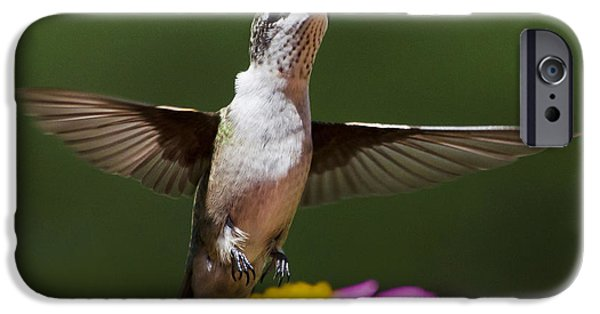 Flying Animals iPhone Cases - Hummingbird iPhone Case by Christina Rollo