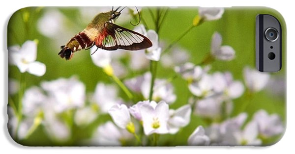 Cuckoo iPhone Cases - Hummingbird Clearwing Moth And White Flowers iPhone Case by Christina Rollo