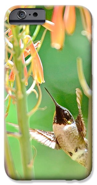 Ruby Garden Jewel iPhone Cases - Hummingbird Dreams as Beating to Aloe Blossoms iPhone Case by Wayne Nielsen
