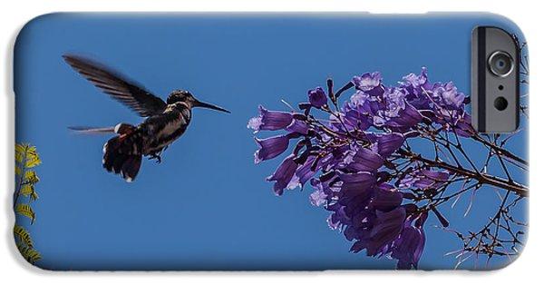 Jacaranda Tree iPhone Cases - hummingbird feeding on a Jacaranda tree iPhone Case by Craig Lapsley
