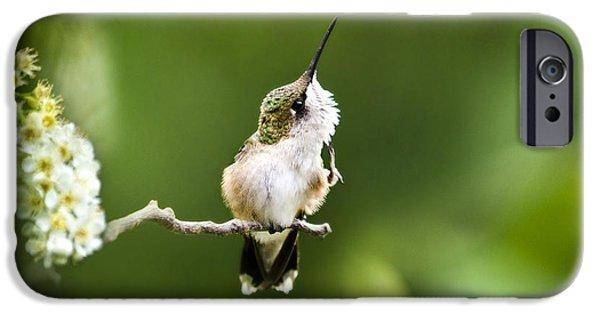 Archilochus Colubris iPhone Cases - Hummingbird Flexibility iPhone Case by Christina Rollo