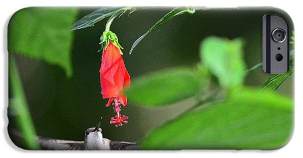 Ruby Garden Jewel iPhone Cases - Hummingbird Flies to Red Turks Cap iPhone Case by Wayne Nielsen