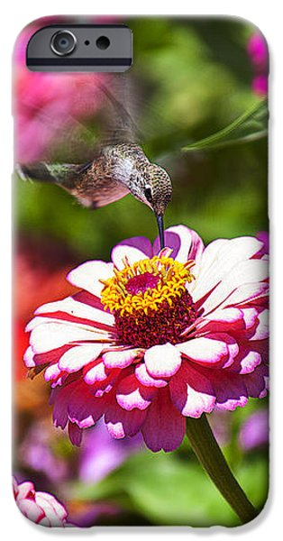 Hummingbird Flight iPhone Case by Garry Gay