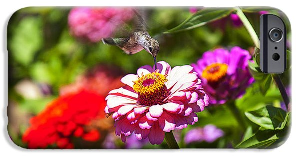 Flower Gardens Photographs iPhone Cases - Hummingbird Flight iPhone Case by Garry Gay