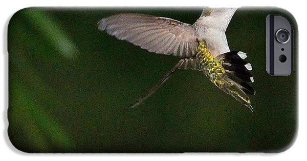 Ruby Garden Jewel iPhone Cases - Hummingbird Frozen in Flight with Wings Back iPhone Case by Wayne Nielsen