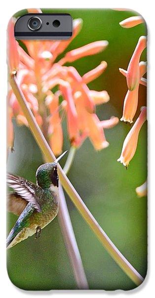 Ruby Garden Jewel iPhone Cases - Hummingbird Green Floats at Aloe Orange iPhone Case by Wayne Nielsen