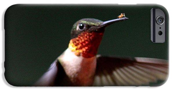 Baby Bird iPhone Cases - Hummingbird - Hitching a Ride - Ruby-throated Hummingbird iPhone Case by Travis Truelove