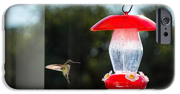 Hovering iPhone Cases - Hummingbird Hovering At Bird Feeder iPhone Case by Panoramic Images