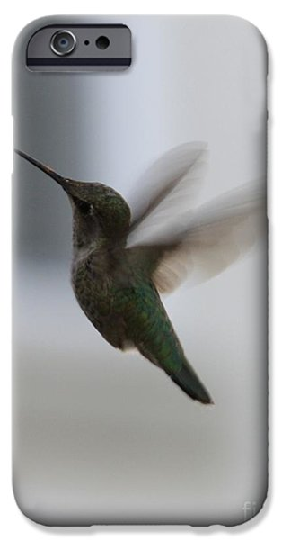 Hummingbird iPhone Cases - Hummingbird in Flight iPhone Case by Carol Groenen
