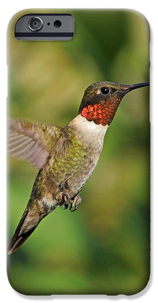 Hummingbird in Flight iPhone Case by Sandy Keeton