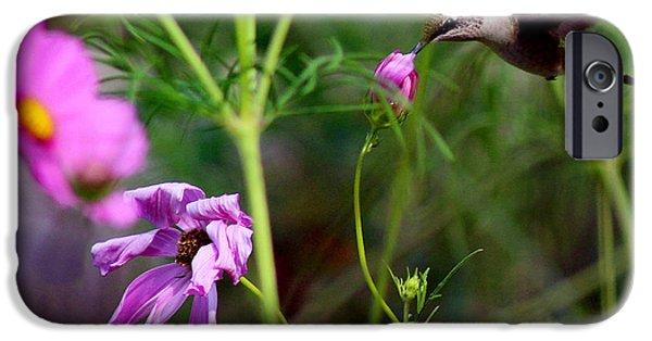 Ruby Garden Jewel iPhone Cases - Hummingbird in Garden iPhone Case by Karen Adams