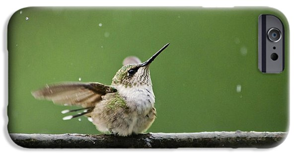 Birds iPhone Cases - Hummingbird In The Rain iPhone Case by Christina Rollo