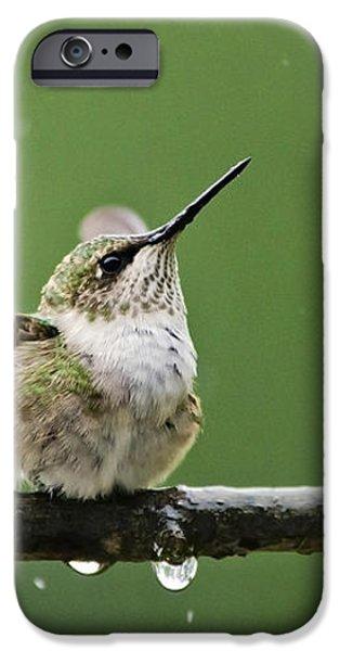 Hummingbird In The Rain iPhone Case by Christina Rollo