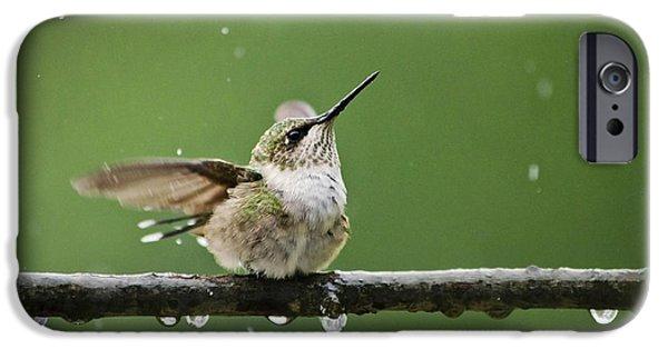 Archilochus Colubris iPhone Cases - Hummingbird In The Rain iPhone Case by Christina Rollo