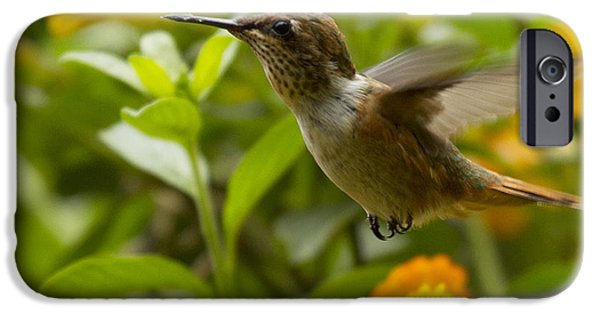 Best Sellers -  - Fauna iPhone Cases - Hummingbird looking for food iPhone Case by Heiko Koehrer-Wagner