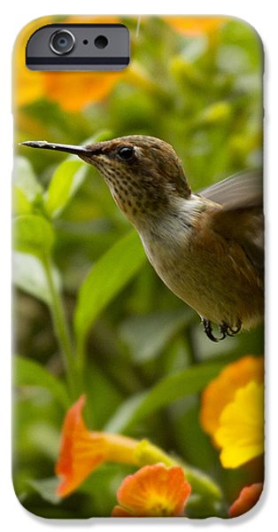 Hummingbird looking for food iPhone Case by Heiko Koehrer-Wagner