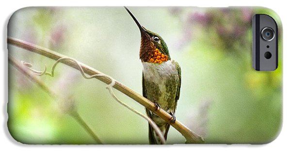 Flora iPhone Cases - Hummingbird Looking for Love iPhone Case by Christina Rollo