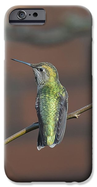 Birds iPhone Cases - Hummingbird looking left iPhone Case by Beth Wolff