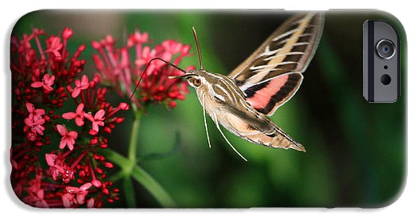 Flight iPhone Cases - Hummingbird Moth iPhone Case by Donna Kennedy