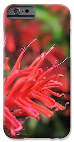 Hummingbird Moth feeding on red flower iPhone Case by Dan Friend