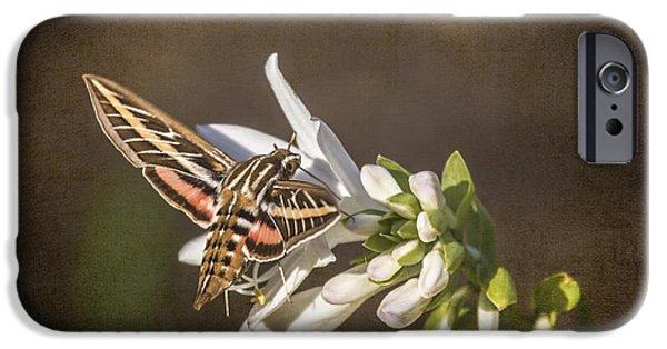 Jeff Swanson iPhone Cases - Hummingbird Moth iPhone Case by Jeff Swanson