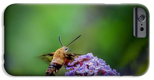 Nature Center Pond iPhone Cases - Hummingbird Moth iPhone Case by LeeAnn McLaneGoetz McLaneGoetzStudioLLCcom