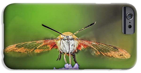 Nature Center Pond iPhone Cases - Hummingbird Moth Strike iPhone Case by LeeAnn McLaneGoetz McLaneGoetzStudioLLCcom