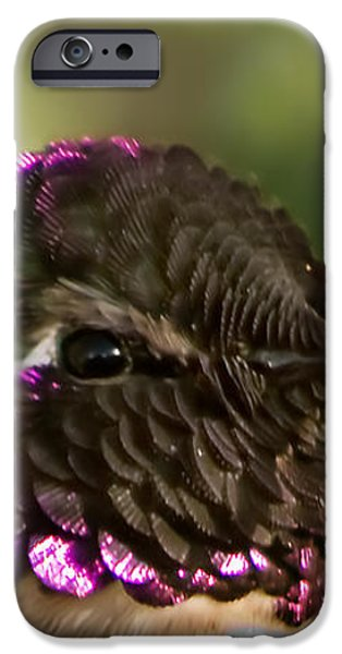 Hummingbird Portrait iPhone Case by Robert Bales