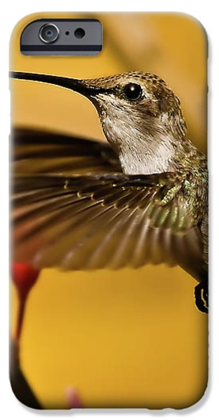 Hummingbird iPhone Case by Robert Bales