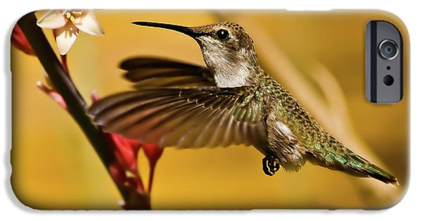 Haybale iPhone Cases - Hummingbird iPhone Case by Robert Bales
