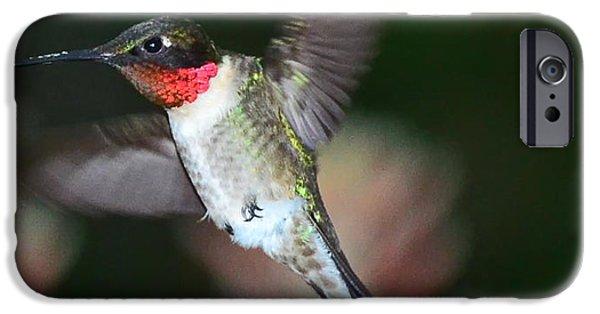 Ruby Garden Jewel iPhone Cases - Hummingbird Ruby Throat and Bee Vie Aloe iPhone Case by Wayne Nielsen