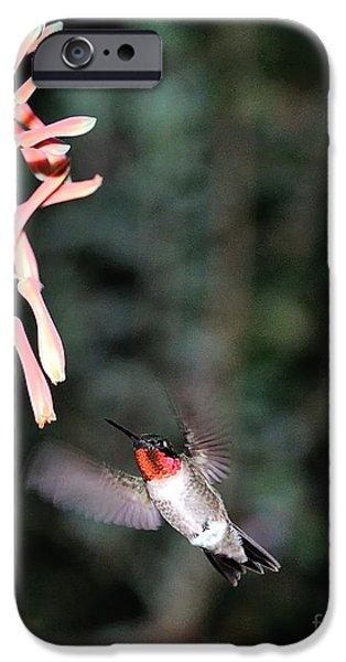 Ruby Garden Jewel iPhone Cases - Hummingbird Ruby Throat Approaches Aloe iPhone Case by Wayne Nielsen