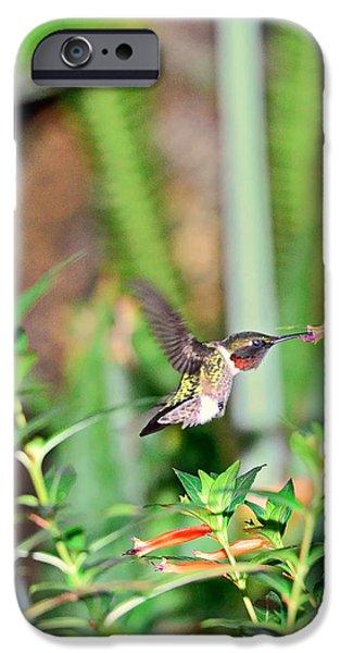 Ruby Garden Jewel iPhone Cases - Hummingbird Ruby Throat at Cigar Orange iPhone Case by Wayne Nielsen
