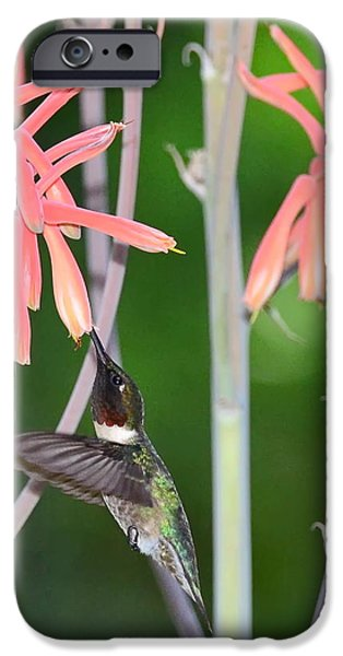 Ruby Garden Jewel iPhone Cases - Hummingbird Ruby Throated Sips in Air from Aloe Blooms iPhone Case by Wayne Nielsen