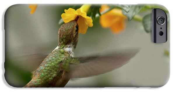 Animal Photographs iPhone Cases - Hummingbird sips Nectar iPhone Case by Heiko Koehrer-Wagner