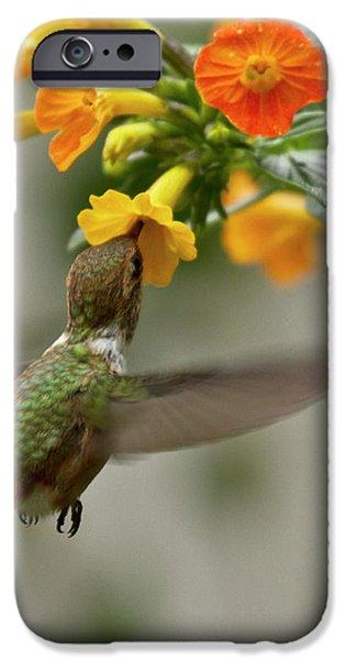Hummingbird sips Nectar iPhone Case by Heiko Koehrer-Wagner