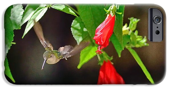 Ruby Garden Jewel iPhone Cases - Hummingbird Soars by Red Blooms iPhone Case by Wayne Nielsen
