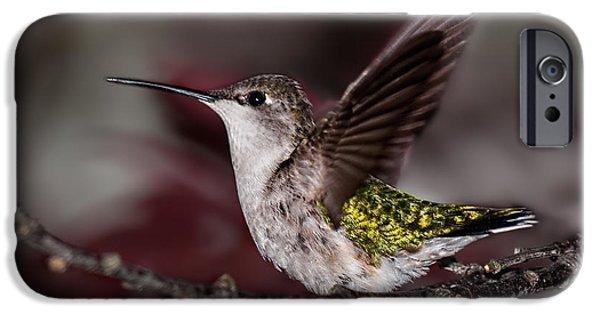Archilochus Colubris iPhone Cases - Hummingbird Stretching iPhone Case by Lara Ellis