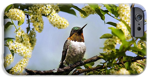 Archilochus Colubris iPhone Cases - Hummingbird with Flowers iPhone Case by Christina Rollo