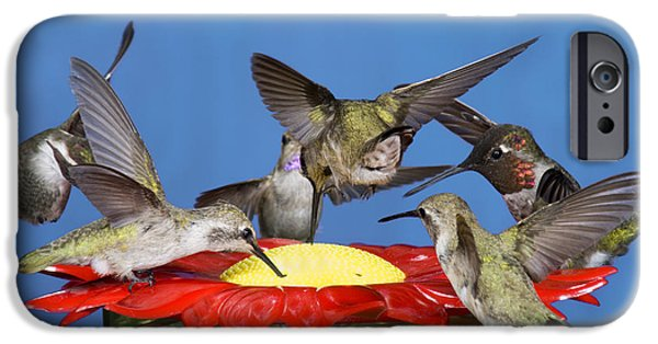 Feeding Young iPhone Cases - Hummingbirds At Feeder iPhone Case by Anthony Mercieca