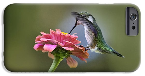 Archilochus Colubris iPhone Cases - Hummingbirds Pure Goodness iPhone Case by Christina Rollo
