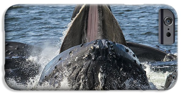 Chatham iPhone Cases - Humpback Feeding Close-up iPhone Case by Lisa Hufnagel