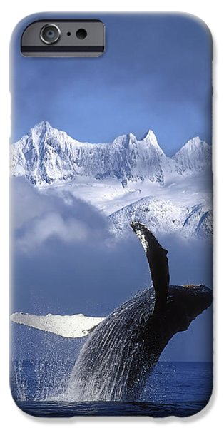 Humpback Whale Breaches In Clearing Fog iPhone Case by John Hyde