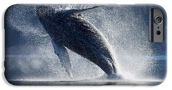 Inside Passage iPhone Cases - Humpback Whale Breaching In The Waters iPhone Case by John Hyde